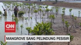VIDEO: Mangrove Sang Pelindung Pesisir (4-5)