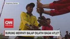 VIDEO: Burung Merpati Balap Dilatih Bagai Atlet