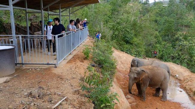 Thailand Memulai Era Safari Gajah yang Lebih Manusiawi