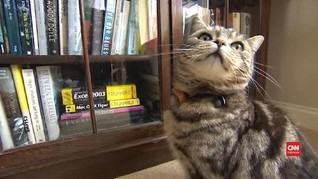 VIDEO: Peneliti Temukan Vaksin Anti-Alergi Bulu Kucing