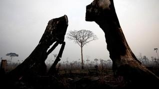 Paus Fransiskus Soroti Negara yang 'Gemar' Rusak Hutan