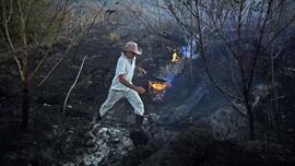 Pemadam Kewalahan Padamkan Karhutla di Bolivia