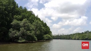 Ibu Kota Baru, Aktivis Minta Bebaskan Lahan Jaga Hutan Bakau