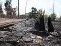 VIDEO: Cerita Suku di Amazon Hadapi Kebakaran Hutan