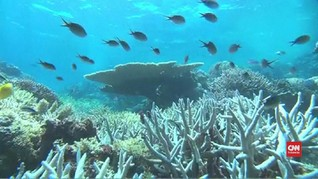 VIDEO: Great Barrier Reef Terancam akibat Perubahan Iklim