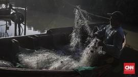 Para Pemburu 'Hantu' Gumpalan Minyak Pertamina di Karawang