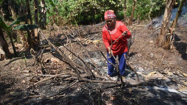 Kesaksian Warga Calon Ibu Kota Baru RI soal Pemburu Tanah