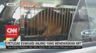 VIDEO: Petugas Evakuasi Anjing yang Menewaskan ART