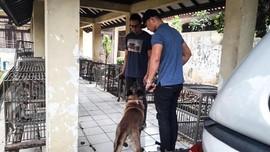 Anjing Pembunuh ART di Jaktim Diperiksa di Ragunan