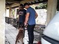 Polisi Periksa Keluarga Pemilik Anjing yang Gigit ART