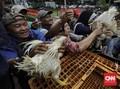 Oversupply Ayam, Peternak Buntung dan Distributor Mujur