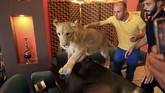 Kebanyakan warga Irak membeli singa kecil berusia empat hingga dua bulan karena lebih mudah untuk dilatih dan dijinakkan. (REUTERS/Ari Jalal)
