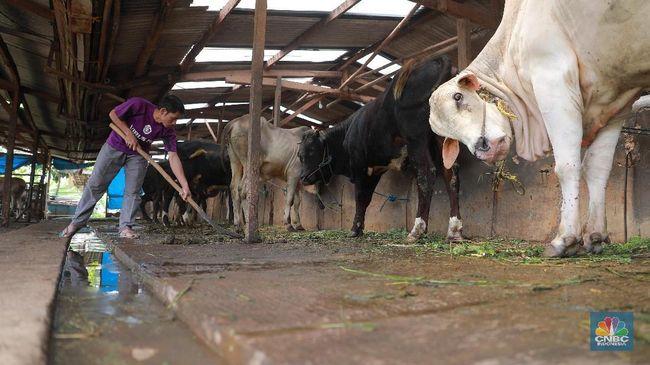 BEEF Importir Daging Ini Buka Opsi Terbitkan Saham Baru & Obligasi