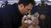 Komite Kementerian Lingkungan Hidup memastikan ada aturan baru akan menentukan jenis hewan apa saja yang bisa dijual, serta memastikan bahwa ada dokter hewan berlisensi untuk merawat singa. (REUTERS/Ari Jalal)