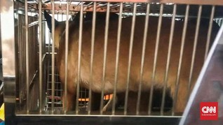 Negatif Rabies, Anjing Milik Bima Aryo Diserahkan ke Unit K9