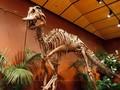 Peneliti Temukan Dinosaurus Moncong Bebek Terbesar di Jepang