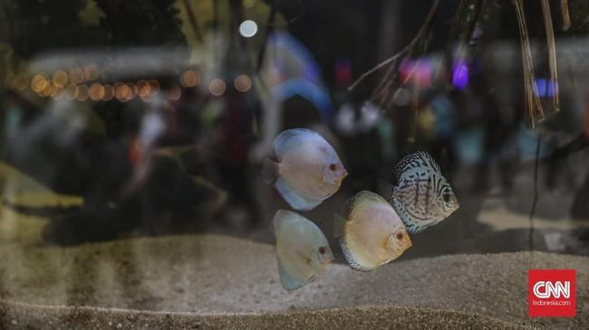Instalasi aquascape yang dipamerkan di pameran Flora dan Fauna 2019 di Lapangan Banteng, Jakarta, Jumat, 6 September 2019. (CNN Indonesia/Bisma Septalisma)