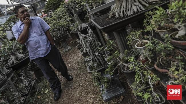 Seorang pengunjung sedang memerhatikan tanaman bonsai yang dipamerkan di pameran Flora dan Fauna 2019 di Lapangan Banteng, Jakarta, Jumat, 6 September 2019. (CNN Indonesia/Bisma Septalisma)
