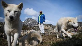 Kepunahan Es Mengancam Populasi Anjing Greenland