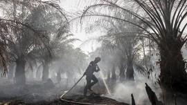 Sebanyak 42 Lahan Perusahaan Terlibat Karhutla Disegel