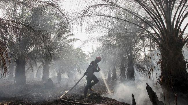 Polisi Rokan Hilir Riau Tangkap Guru Pembakar Lahan