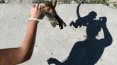 Pulau Monyet dikecam sebagai objek wisata yang mempromosikan kekejaman terhadap hewan liar oleh para aktivis pecinta fauna. (AFP/Nhac Nguyen)
