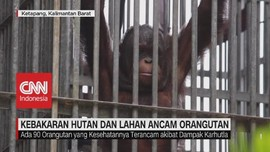 VIDEO: Kebakaran Hutan dan Lahan Ancam Orangutan