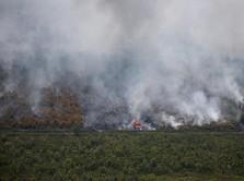 Setop Kebakaran Hutan! Maskapai & Penumpang Sama-sama Rugi