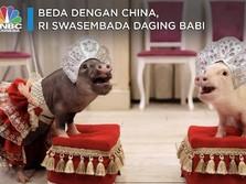 Beda dengan China, RI Swasembada Daging Babi