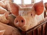 Berawal dari 22 Babi, Orang Ini Salah Satu Terkaya di China
