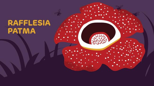 Image result for rafflesia patma