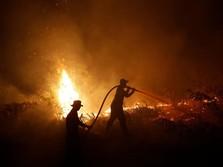 Kebakaran Hutan, Jokowi Sesalkan Kerja Sama Kurang Efektif