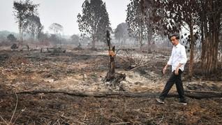 25 Ribu Orang Teken Petisi Hukum Perusahaan Pembakar Hutan