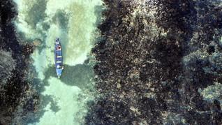 Jamaika Rangkul Nelayan Jadi 'Petani' Terumbu Karang