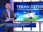 Tekan Defisit Negara dengan Cara Swasembada Babi