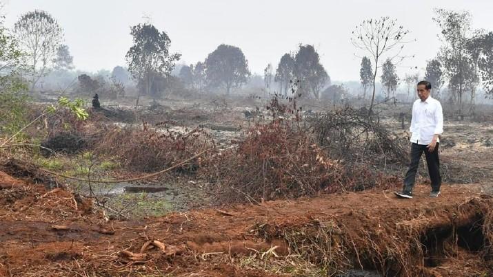 Presiden Joko Widodo meninjau lokasi karhutla di Desa Merbau, Kecamatan Bunut, Kabupaten Pelalawan, Kota Pekanbaru, Selasa, (17/9/2019)  (BPMI Setpres/Laily Rachev)