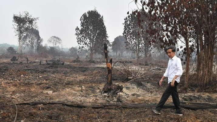 Presiden Joko Widodo meninjau lokasi karhutla di Desa Merbau, Kecamatan Bunut, Kabupaten Pelalawan, Kota Pekanbaru, Selasa, (17/9/2019). (BPMI Setpres/Laily Rachev)