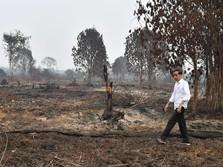 Wajar Jokowi Pelototi Karhutla, Ancamannya Berbahaya!