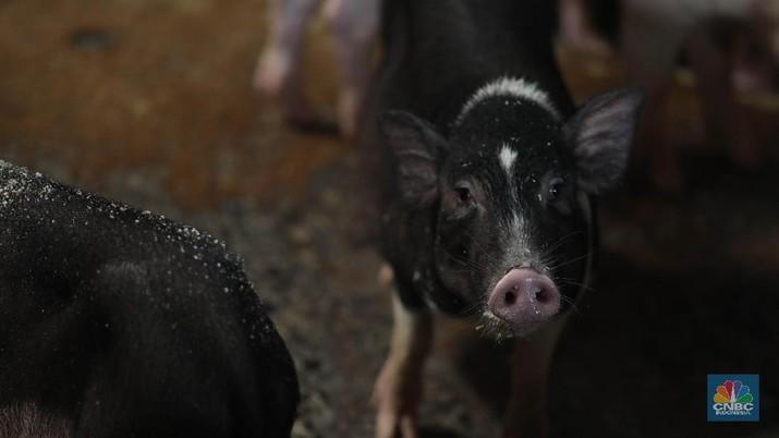RI Setop Impor Hewan Hidup dari China, Ada Bukti Berbahaya?