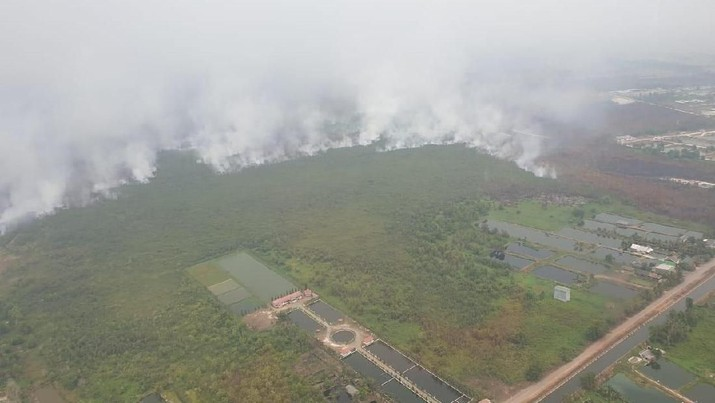 Ada Kebakaran Hutan, Kunjungan Turis ke RI Turun Tajam