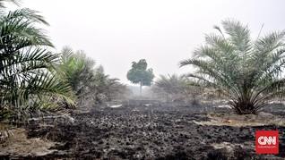 400 Ha Kawasan Konservasi Banyuasin Terbakar, Satwa Terancam