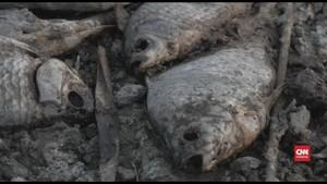 VIDEO: Cuaca Panas Bikin 10 Ribu Ikan di Yunani Mati