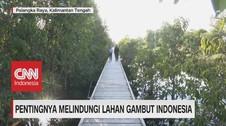 VIDEO: Pentingnya Melindungi Lahan Gambut Indonesia