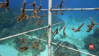 VIDEO: Mencegah Kepunahan Terumbu Karang di Jamaika