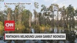 VIDEO: Gambut, Warisan Berharga Indonesia