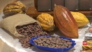 VIDEO: Kakao, Panenan Alternatif Peru Setelah Kokain