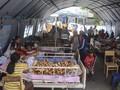 Korban Meninggal Gempa Maluku Bertambah Jadi 31 Orang
