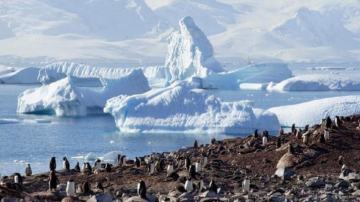 Ingin mencoba tinggal di Antartika secara cuma-cuma?