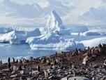 Mau Tinggal di Antartika Sebulan Gratis? Begini Caranya