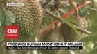 VIDEO: Produksi Durian Monthong Thailand